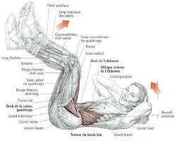 exercices d'abdominaux - musculation abdominaux